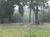 just-a-little-rain-must-fall
